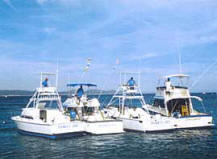 Cabo San Lucas Fishing - Sport Fishing vacation Packages in Los Cabos ...